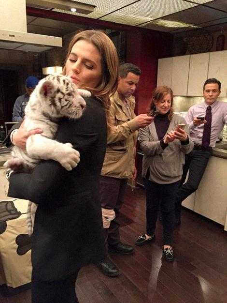 Caption this. @seamusdever @Jon_Huertas @Stana_Katic @lizbeth4beauty http://t.co/laZX7PiLLP