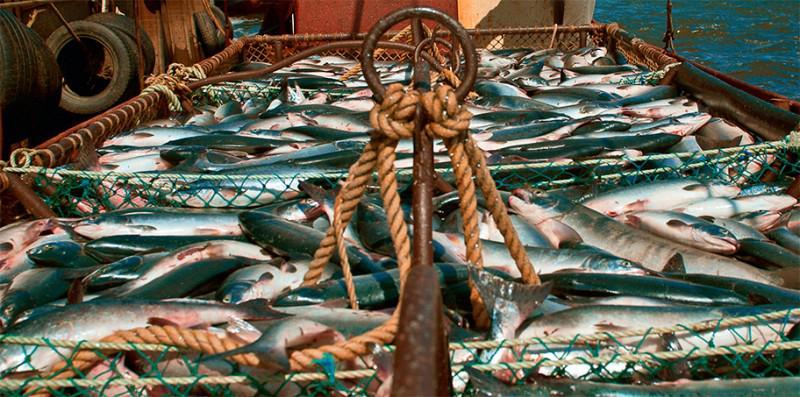 восточная рыболовная компания