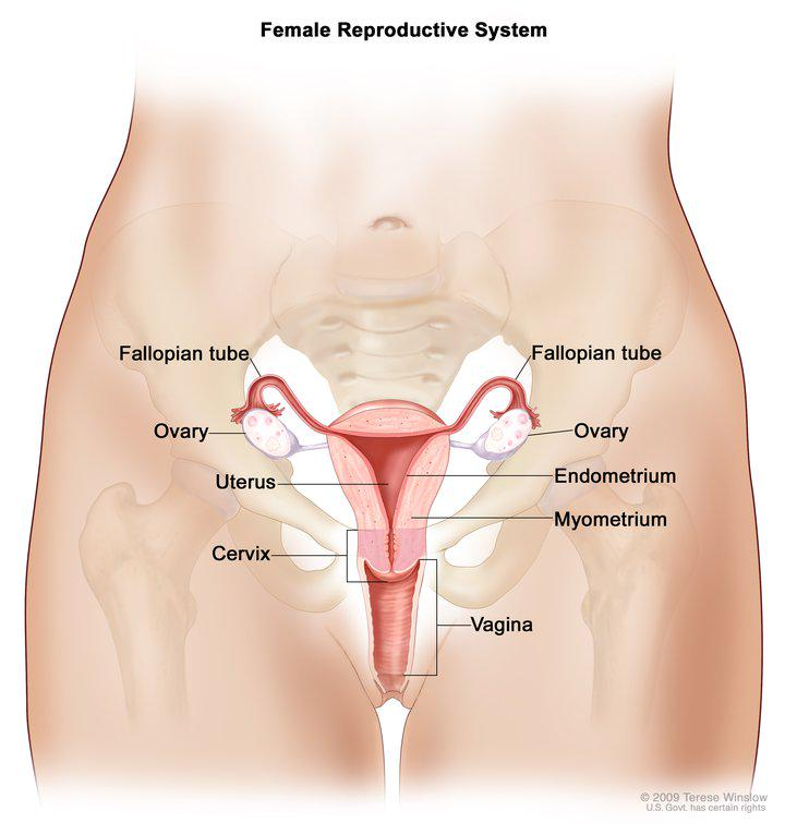 What are treatment options for cancers of the ovaries, fallopian tubes & primary peritoneum? http://t.co/OmM7B159cb http://t.co/7Mcb22gj3U