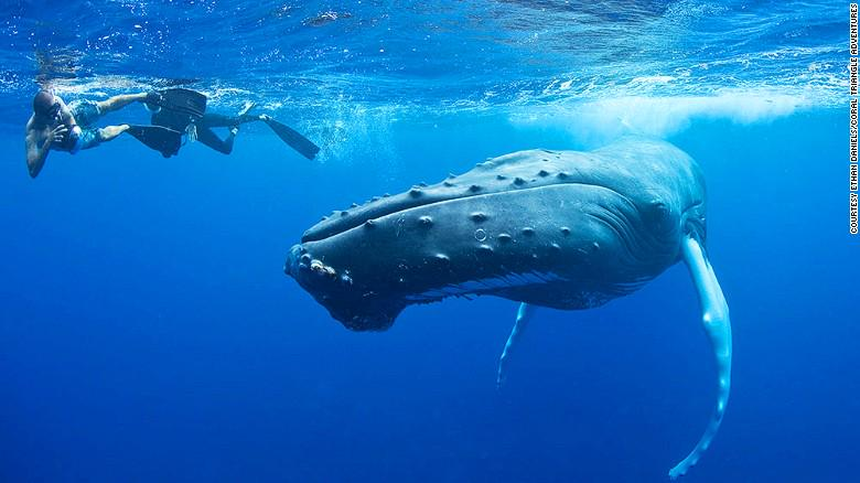 Swim with whales and (non-stinging) jellyfish this summer