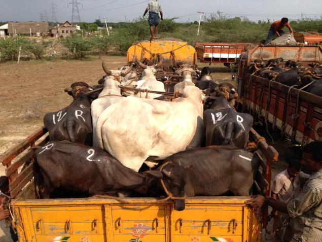 cruelty to animals essay india