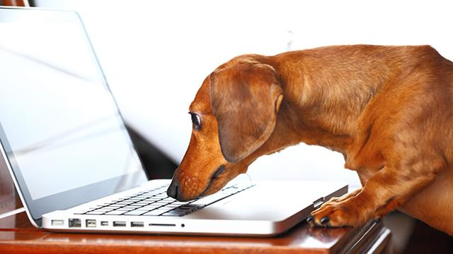Pets have better web portals for medical records than their human owners.http://t.co/TMCRvg17sQ @Health_Affairs http://t.co/fESextA9SM