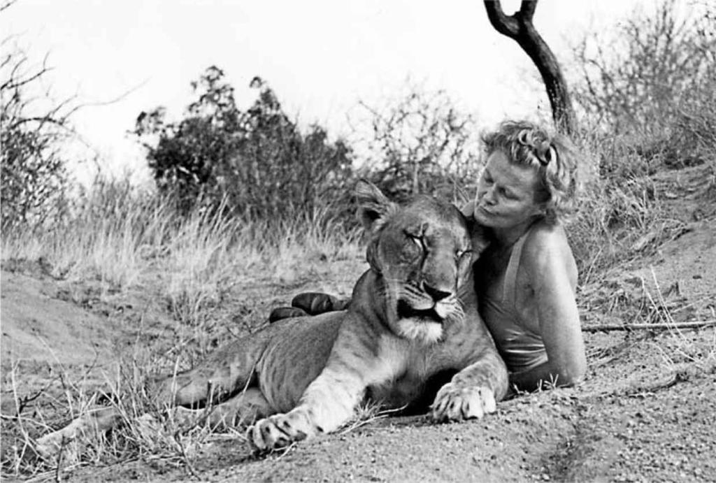 #WorldLionDay A look at Born Free's Joy Adamson: http://t.co/T2efpjumCc @jimmykimmel @JaneGoodallInst @PETA http://t.co/KhjylU9ggb