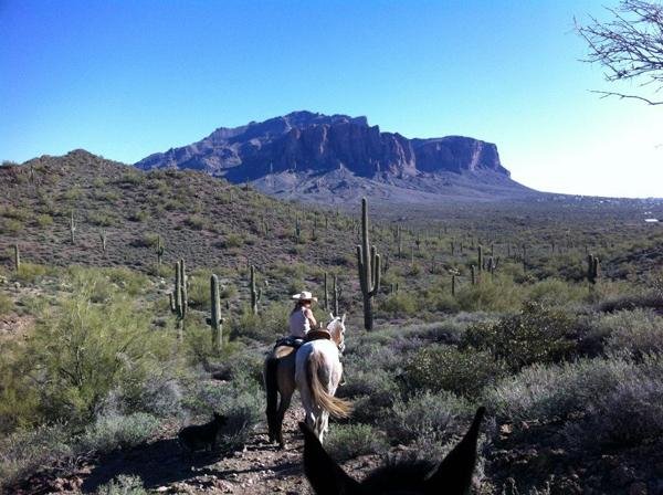 10 Tips for Horse Riding When It's Hot: http://t.co/pQYkvekn9c #horses #horsebackriding http://t.co/hIS2aTPYHO