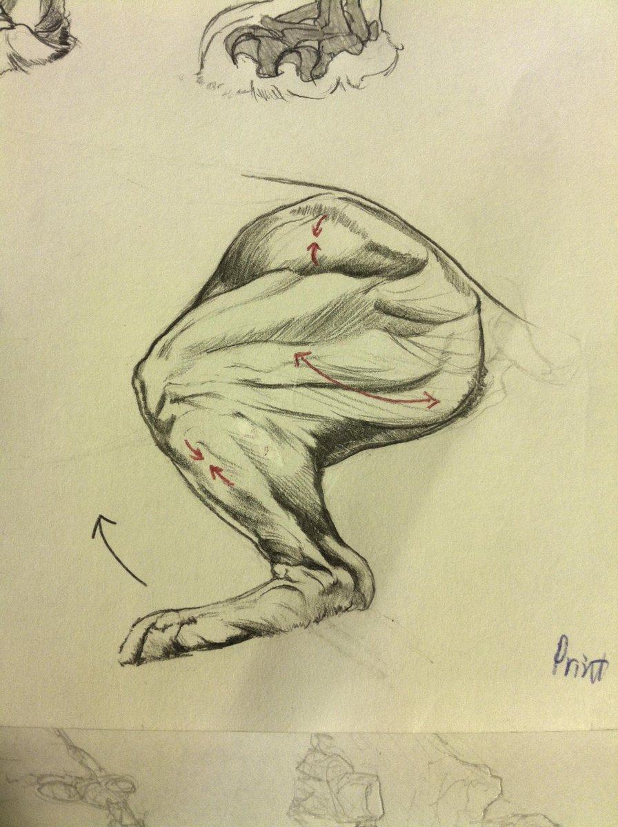 Benlin Alexander On Twitter Lion Anatomy Leg Movement Animal