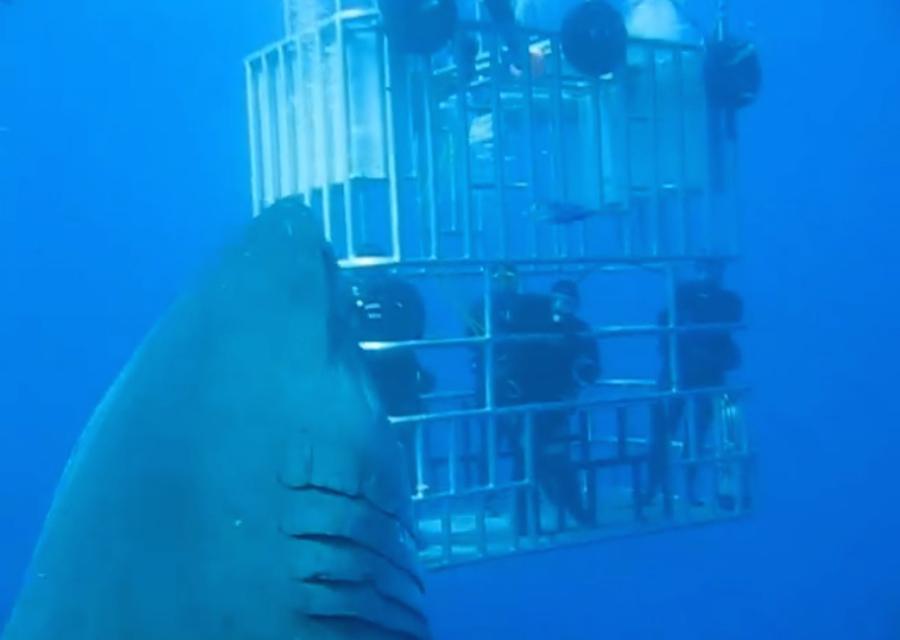Deep Blue (@Deep_Blue_Shark) | Twitter