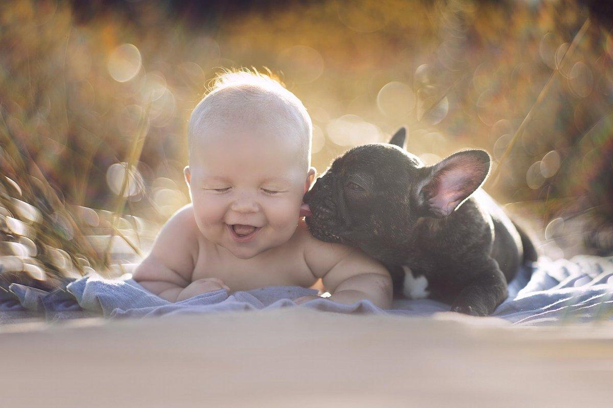 Le foto di un bulldog e un bebè che crescono insieme come fratelli