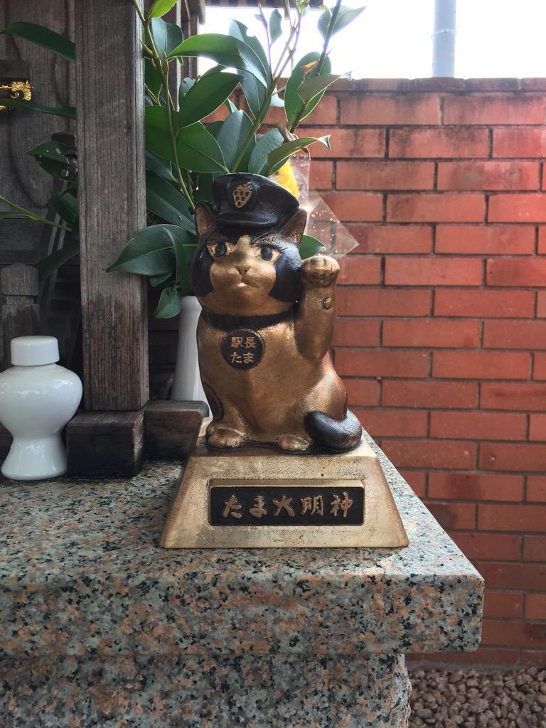 にゃんご!ホントの大明神になりましたにゃんご!仁坂吉伸知事さんにいただいた、称号ですにゃんご! http://t.co/04gL89hxG1