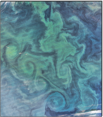 Phytoplankton Labrador Sea summer peak via #VIIRS on @NASANPP from Ocean Biology Processing Group @NASAGoddard http://t.co/gaNnH8ipit