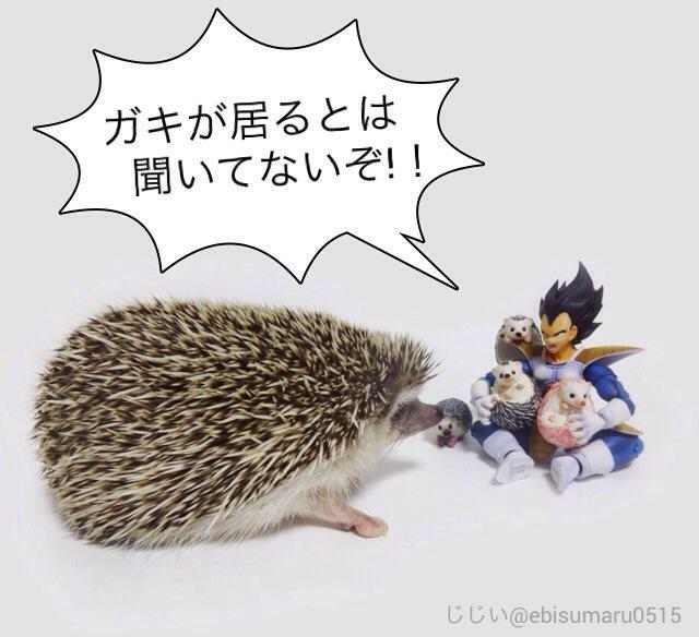 #ベジータとハリネズミ pic.twitter.com/Hf6NpDn6ic