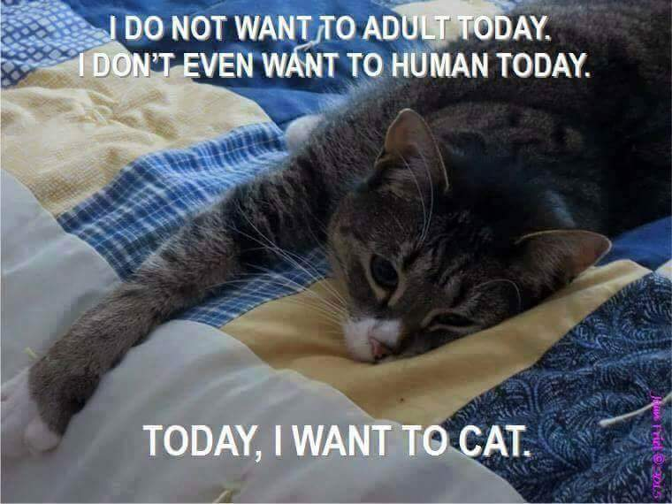 I Don T Want To Adult Today Cat