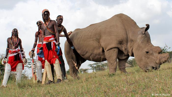 #Maasai warriors are taking to the #cricket field to save the northern white #rhino http://t.co/pFLcsblyOF
