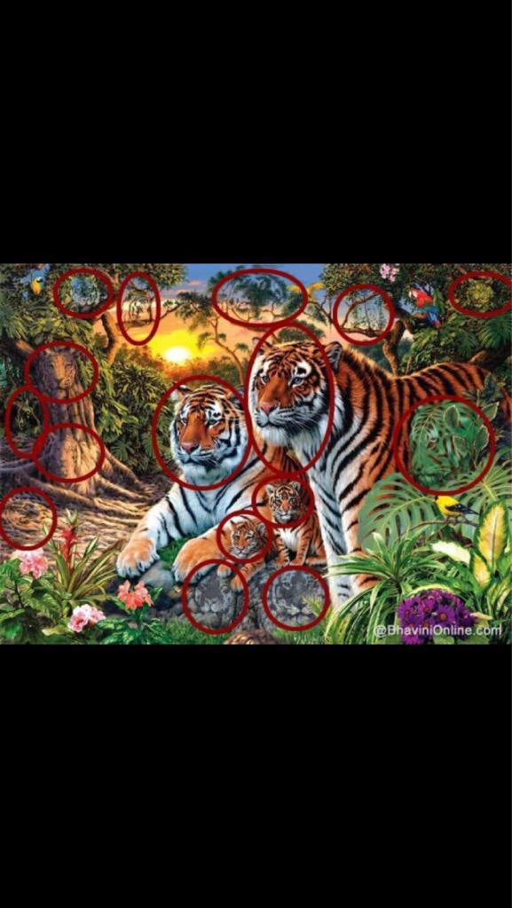Amal Al Hussain On Twitter كم عدد النمور في الصورة Http T Co K3awuknhva