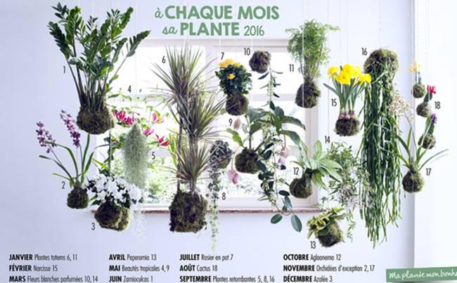 Montlucon future jardinerie www jardinerie animalerie - Office hollandais des fleurs ...