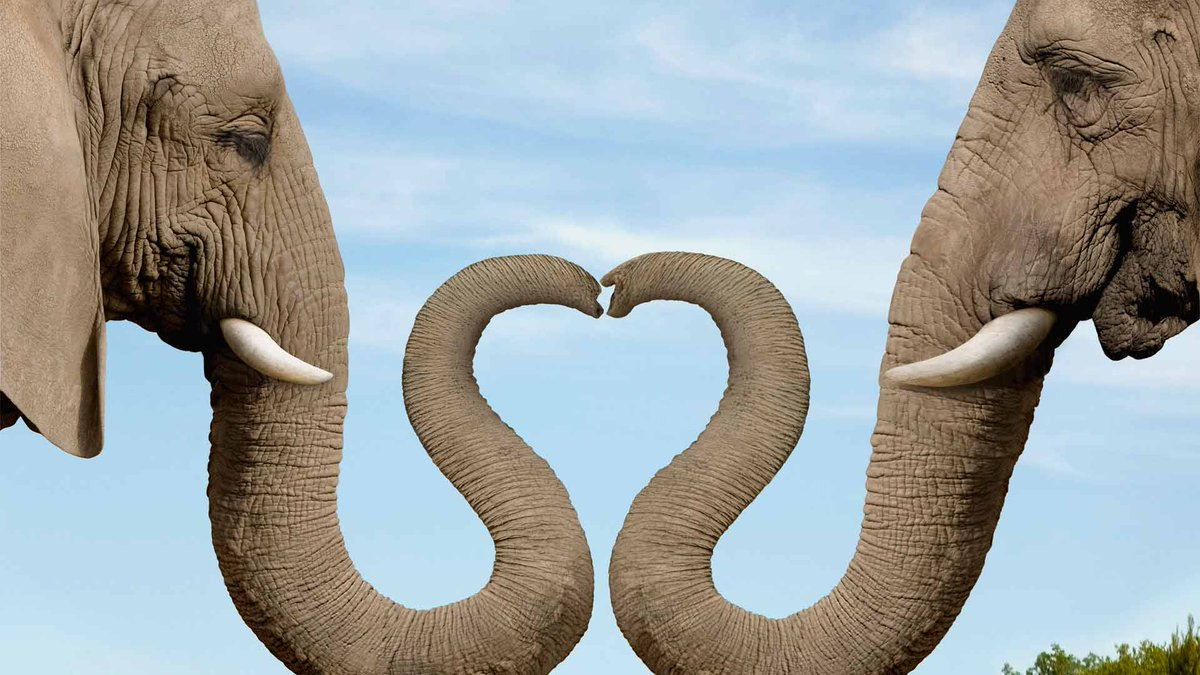How amazing that this creature is so beautiful and compassionate! #Love #Compassion #WorldElephantDay #takenotes ! http://t.co/EDfrklAssx