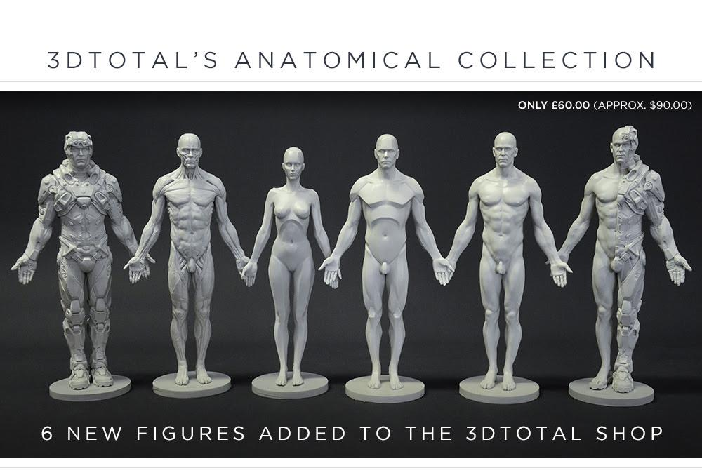 Anatomical Collection Latest News Breaking Headlines And Top