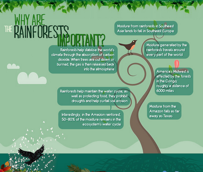 why are rainforests so important Why are rainforests important the rainforest is important for numerous reasons located between the equator 235 degrees north and south, rainforests have two seasons, rainy season and dry season.