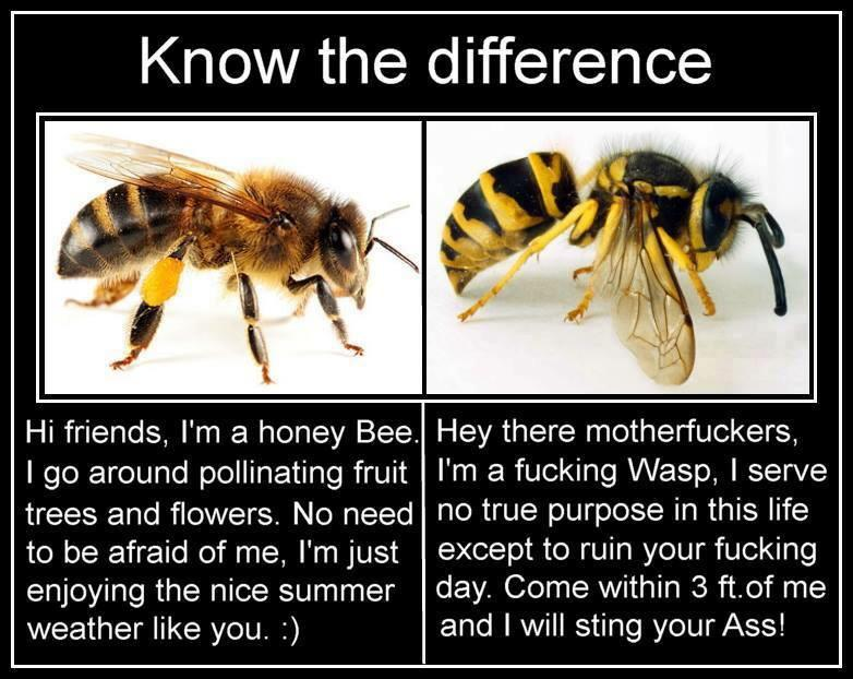 Roos Vonk Ar Twitter Over Het Verschil Tussen Wespen En Bijen