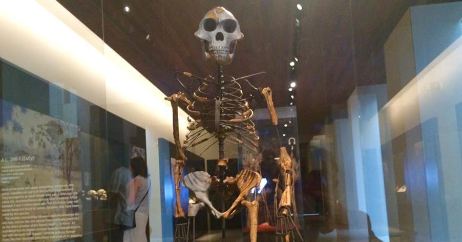 I resti dello scheletro di Australopiteco Lucy.