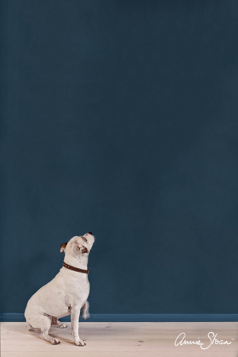 Here's a picture of a friends dog next to my Aubusson Wall Paint! @suziewomble http://t.co/NXX09P5c48