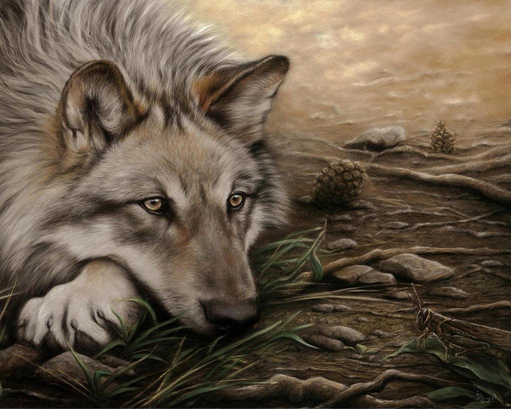 Картинки с волками одинокими