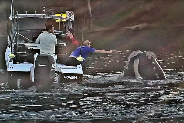 """VIDEO: balena liberata da un sacchetto di plastica """"ringrazia"""""""