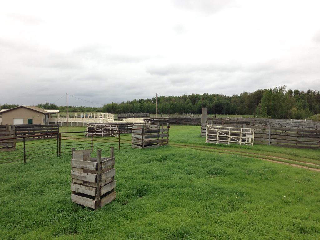 "The holding pens had ""triangles"" for human shelter in case of angry bison. Only 2 workers have ever been injured. http://t.co/RdKKtE2zGH"