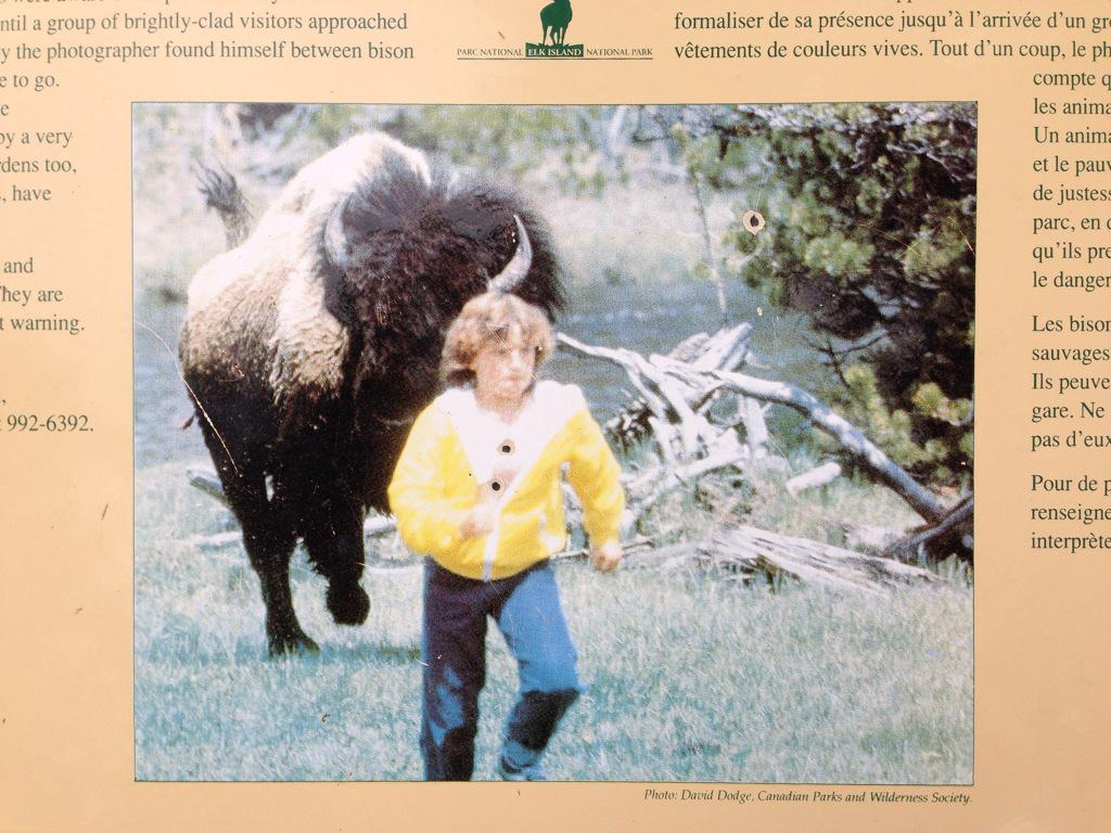 Here's a 1980s-era artifact, which ranks among the finest photos of human-bison interaction ever recorded. http://t.co/G5XZKCM8o5