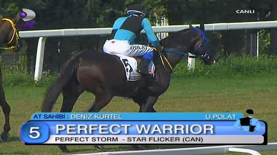 Perfect Warrior horse