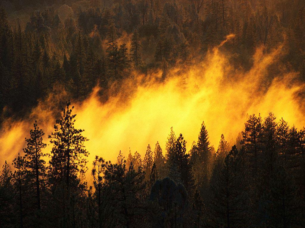 В России горят более 80 тысяч гектаров леса - Цензор.НЕТ 4272