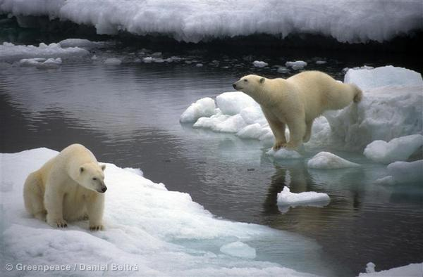 Limited ability, or impossible, to clean oiled marine mammals if large spill in Alaskan Arctic http://t.co/0Vm2WotMJU http://t.co/yN7VIwiYSI