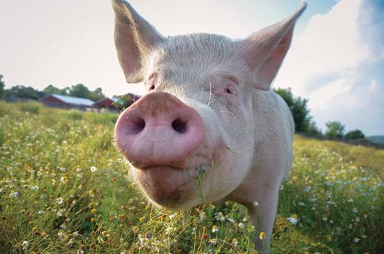 We're helping raise awareness for @FarmSanctuary. Learn how you can help: http://t.co/npUo76wPWD http://t.co/ez2arHPReD