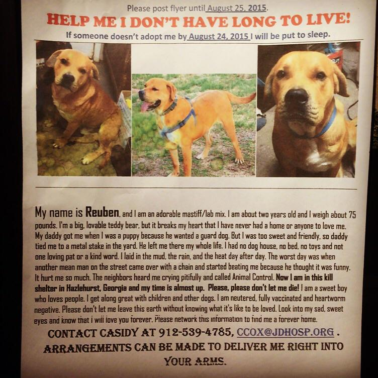 Heart strings alert. Paging all #ATL Dog Lovers.. http://t.co/IFx4fMTGBf