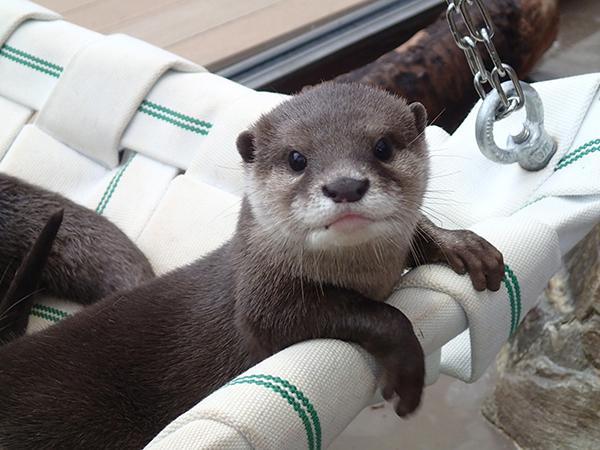 おやすみなさい。明日も素敵な1日でありますように。#サンシャイン水族館  #カワウソ pic.twitter.com/U6NrwR91Sp