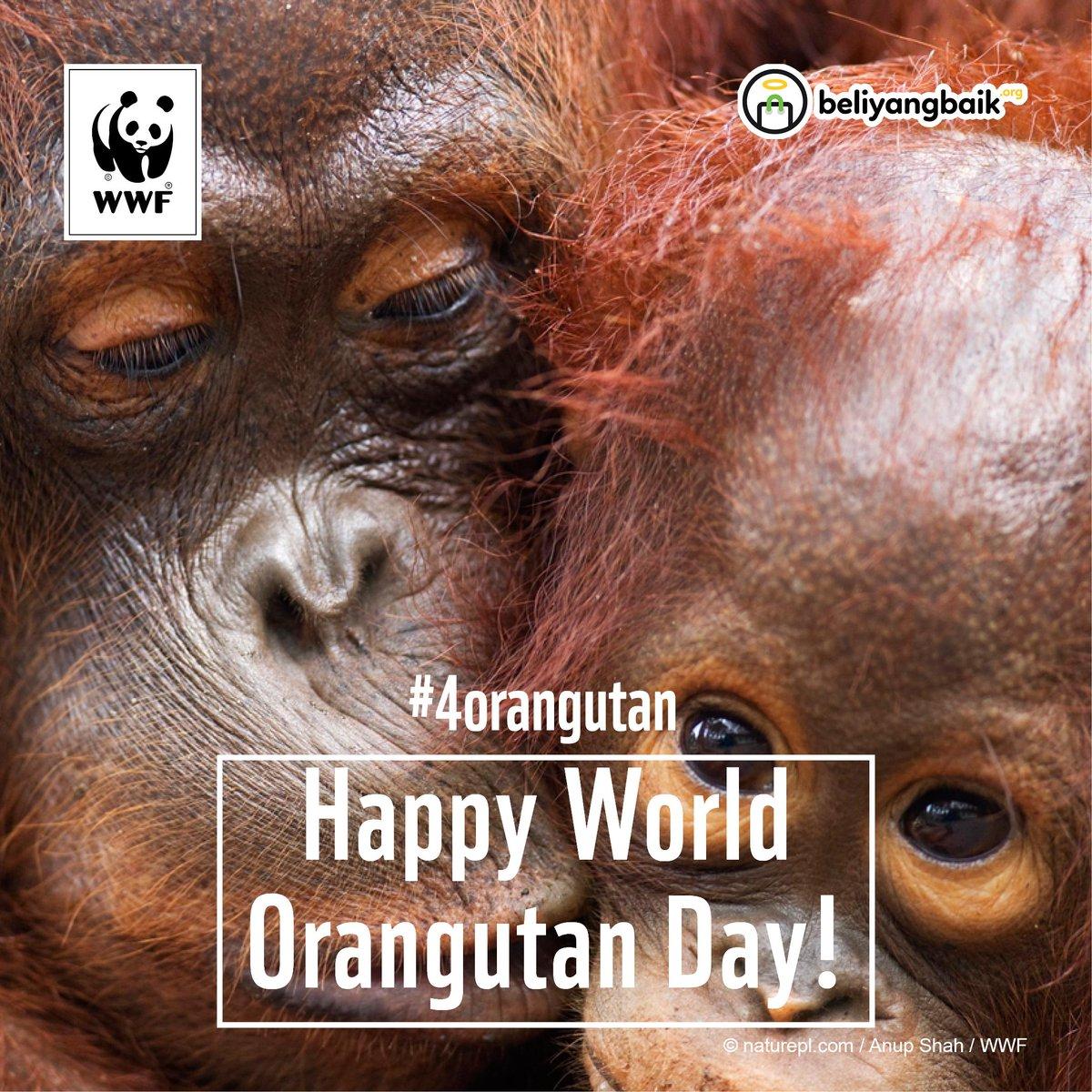 Menjaga Kelestarian Orangutan Demi Keberlangsungan Hutan. #4orangutan http://t.co/wmi80eebfU http://t.co/9VHssdjKxt