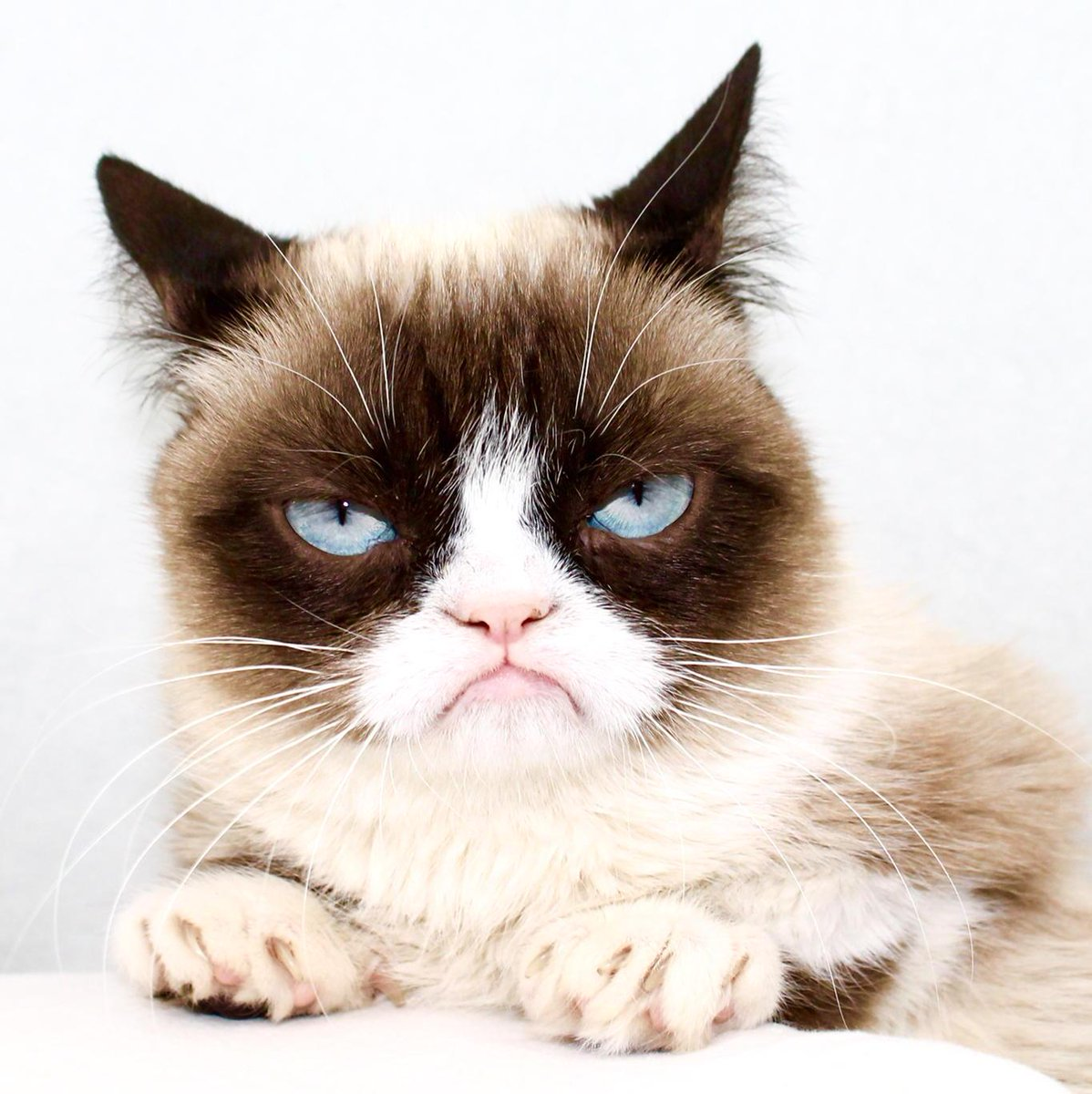 Недовольная кошка картинка