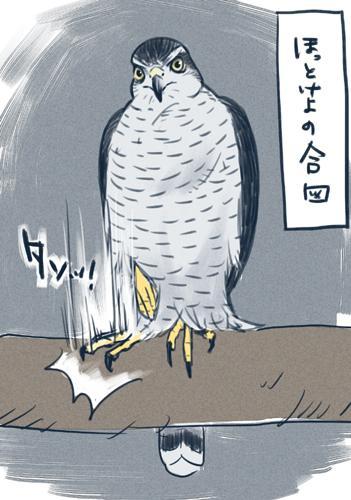 今までオオタカを3羽相棒としてきて、どのオオタカもやるので間違いないと思う。嫌がってソワソワしたり逃げたりするほどではないけど「ほっといてくれ」の時に、足でタン!と止まり木を叩く。孤独を愛する生き物なので、構われるのがうざったい。 pic.twitter.com/NNhgTzx6iF