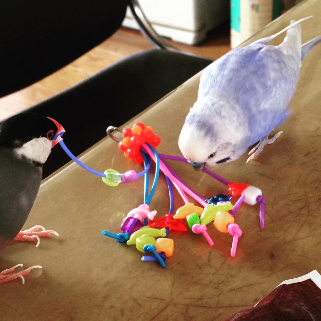 #繋がらなくていいから俺の鳥も見て http://t.co/qahI7D19d1