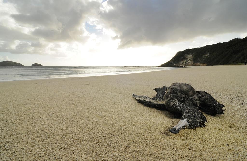 Rifiuti killer: uccelli marini con spazzatura di plastica nello stomaco