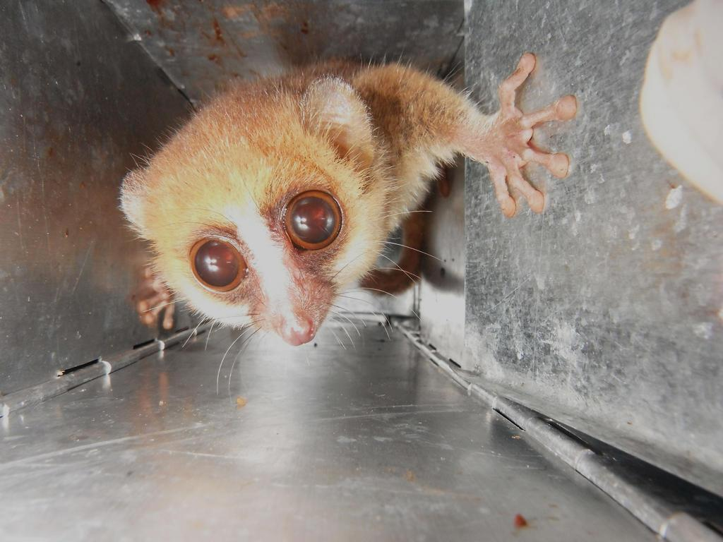 We don't only work with molecules, cells and tissues- also #CuteOff whole organisms involved, like wild mouse lemurs. http://t.co/rWwOSh01M7