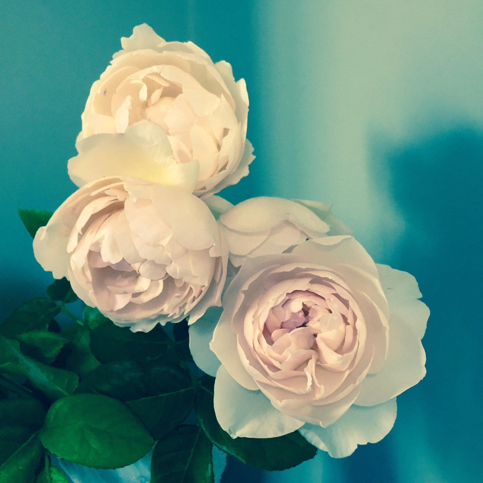 They smell even better than they look! X Stella http://t.co/CLjpnE12bU