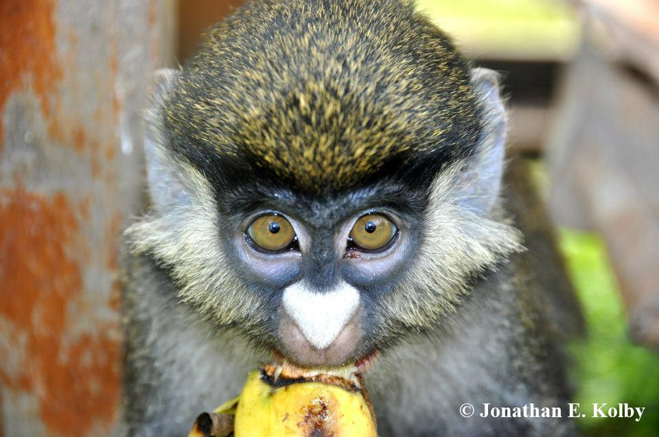 Wait, is this mic still on? I wanna enter the #CuteOff!!! #TeamMammal #monkey #primate http://t.co/wh9AwcaywO