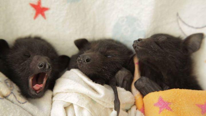 In honor of the #CuteOff, here are 19 animals you never see as babies! >> http://t.co/BoQdSZ2VHs http://t.co/jk0vsdWEmh