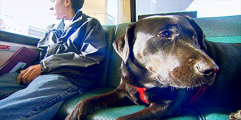 Meet Eclipse: An Adorable Seattle Dog Who Takes The Rush Hour Bus To Park All On Her Own http://t.co/exgQLtka8I http://t.co/kABgsFbDTc