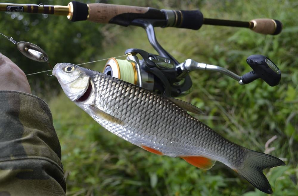 Рыбалка - клев тут