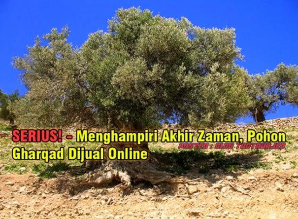 Pohon Gharqad - AnekaNews.net