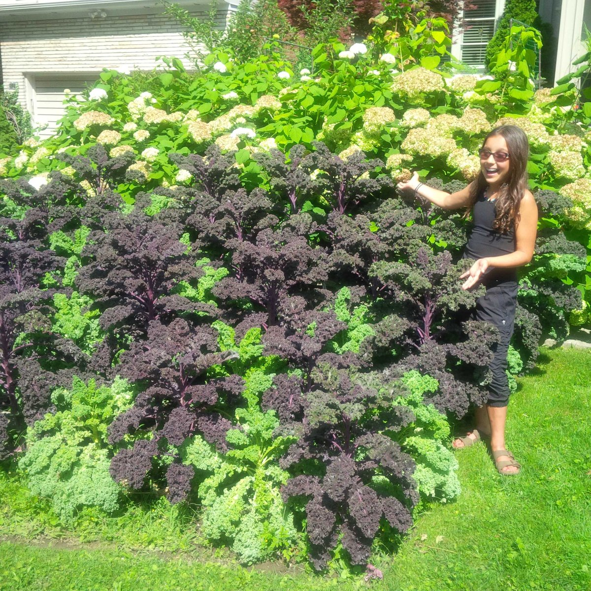 My very own forest of #kale --> http://t.co/1esIuE5UUW