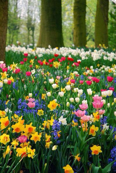 )))El color de la Naturaleza((( CNCNRd3WwAARI4i