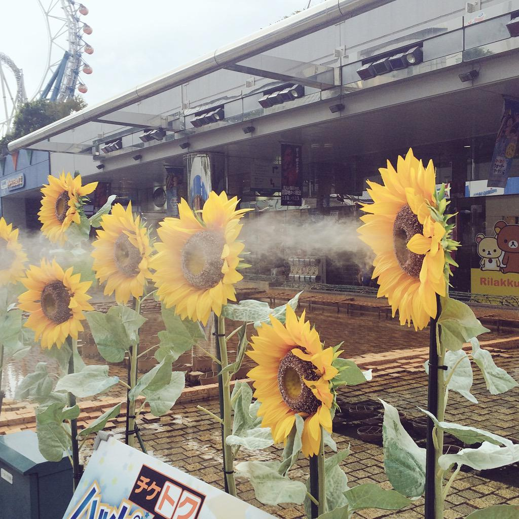 造花のヒマワリにディスペンサーが仕込んであってミストを噴射する様が、昭和の悪の組織の作戦感ある。 pic.twitter.com/IRRIDMLciP