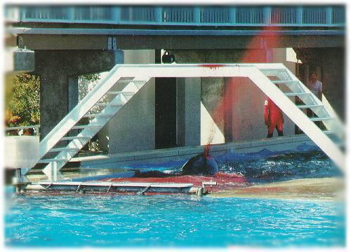 #AskSeaWorld why did you leave her to die in such a horrific manner, she suffered! No wonder Orkid is aggressive!! http://t.co/OSNyyrwINw